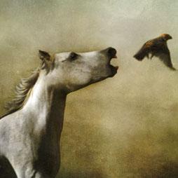 Dream Horse and Finch